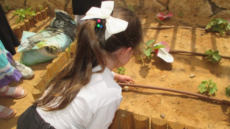A kindergartner tending the drip-irrigation system. Photo courtesy of Leshomra