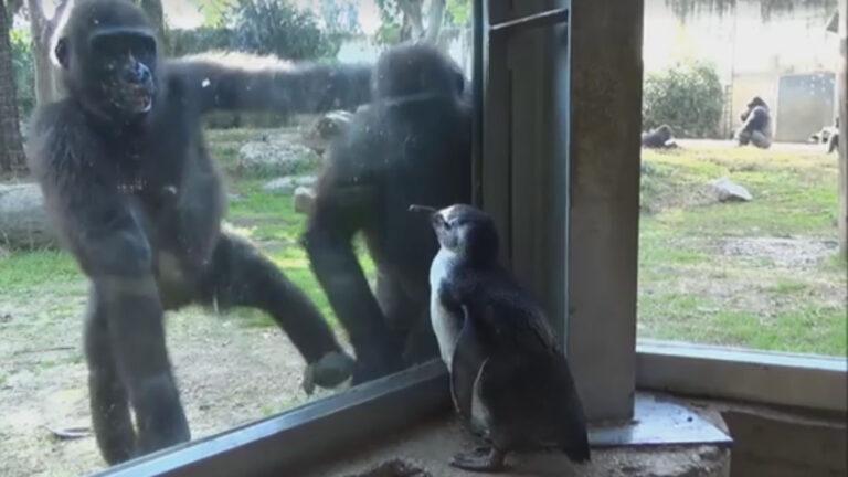 Screenshot from video by Shira Yitzhacki for Ramat Gan Safari.