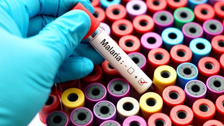 Malaria illustration by Jarun Ontakrai/Shutterstock.com