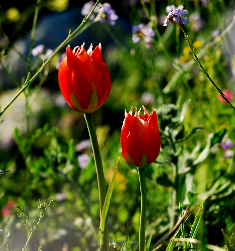 Mount Gilboa is filled with colorful flowers in early spring.