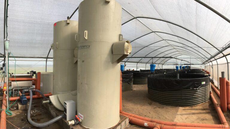Indian catfish farm installs BioFishency filter system