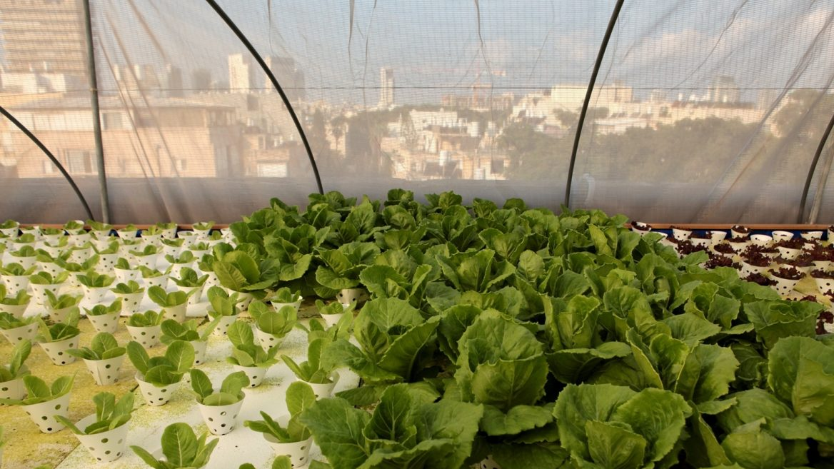Hydroponic Farm Sprouts On The Roof Of A Shopping Mall