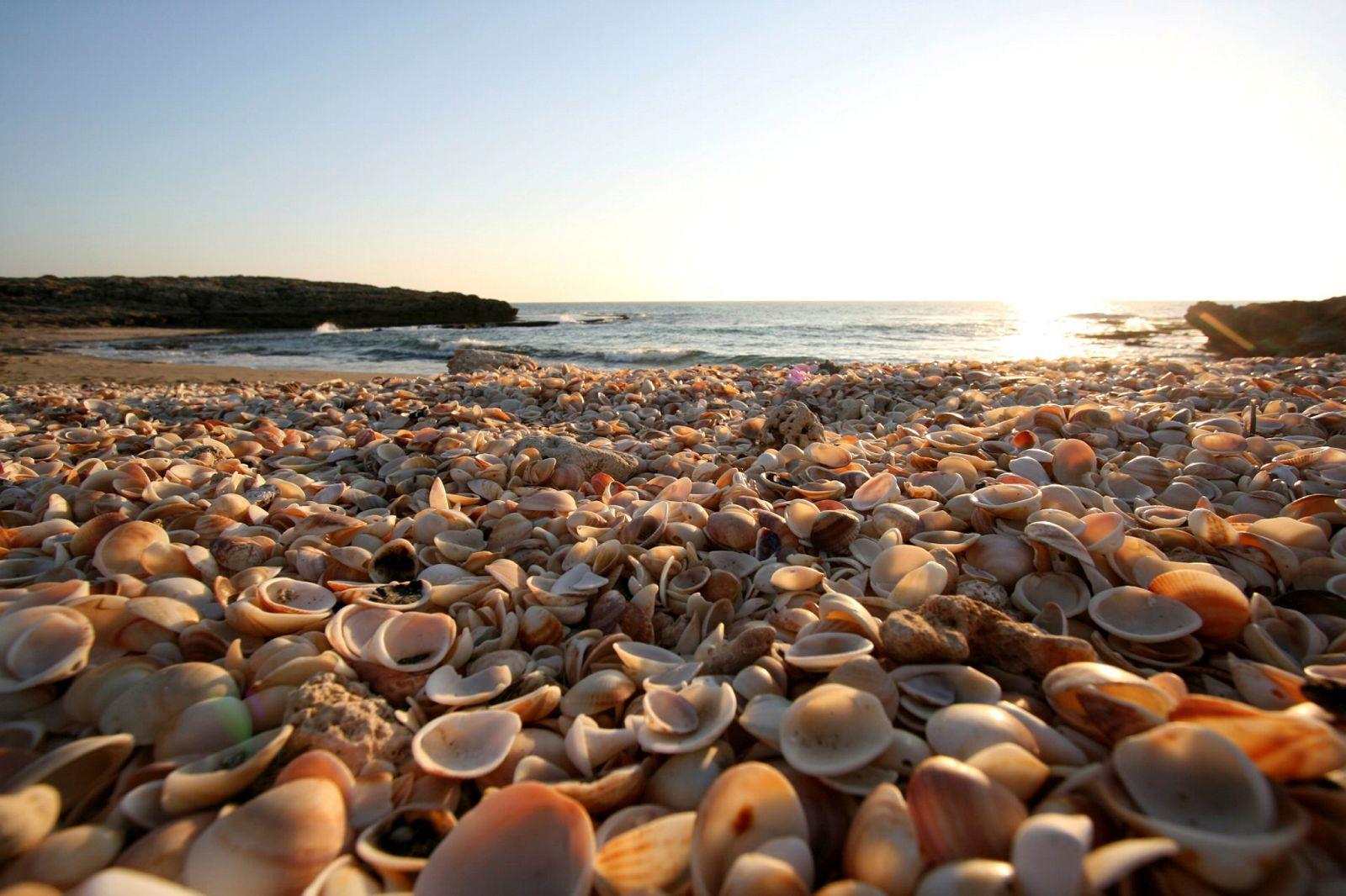 f90_habonim_beach.jpg