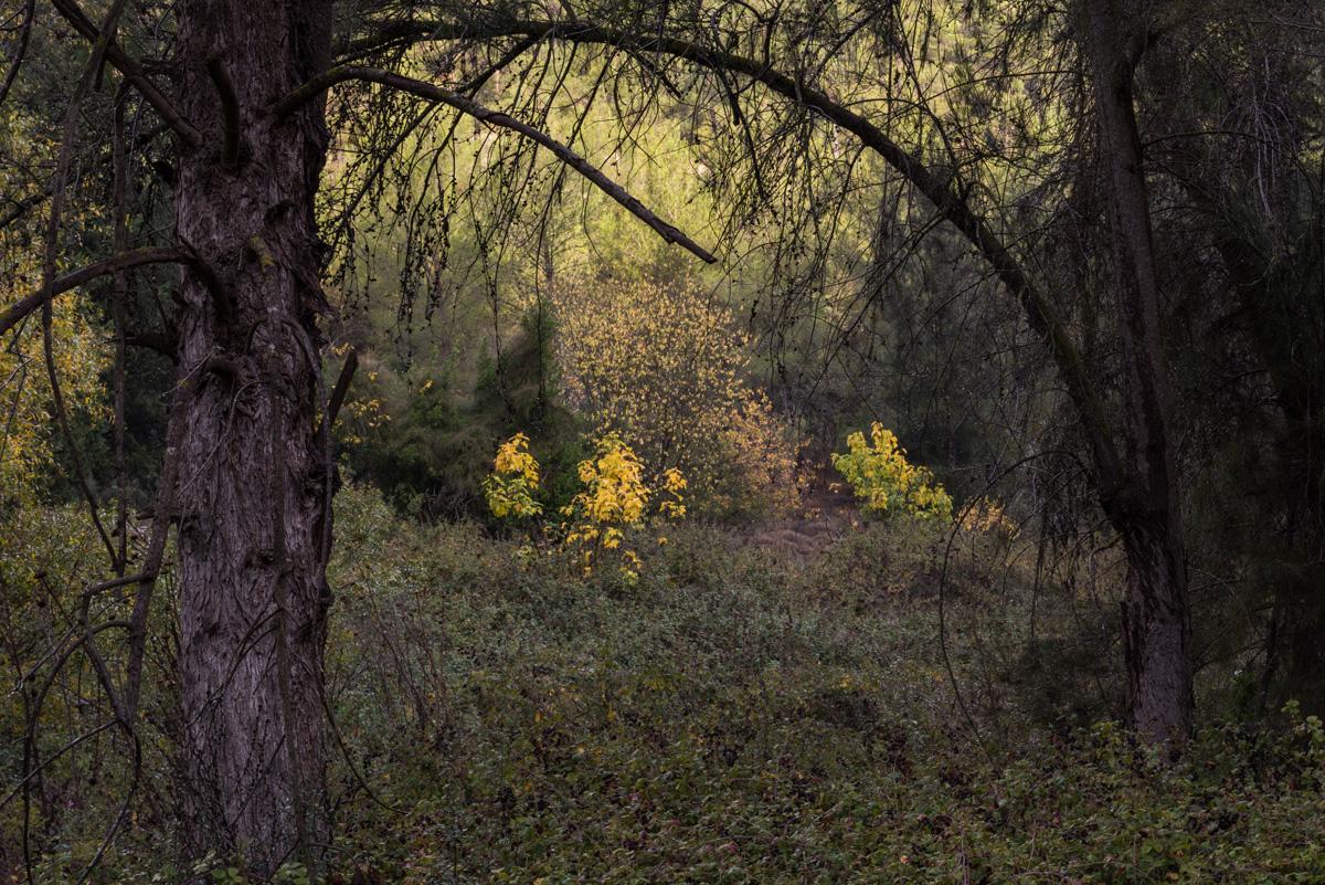 Fall_Foliage_03.jpg