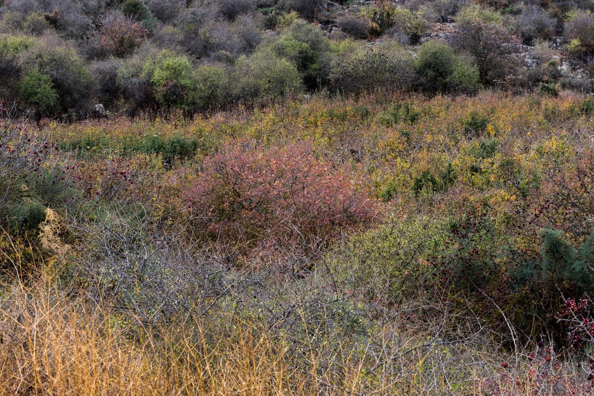 Fall_Foliage_04.jpg