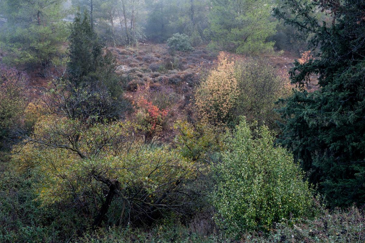 Fall_Foliage_06.jpg