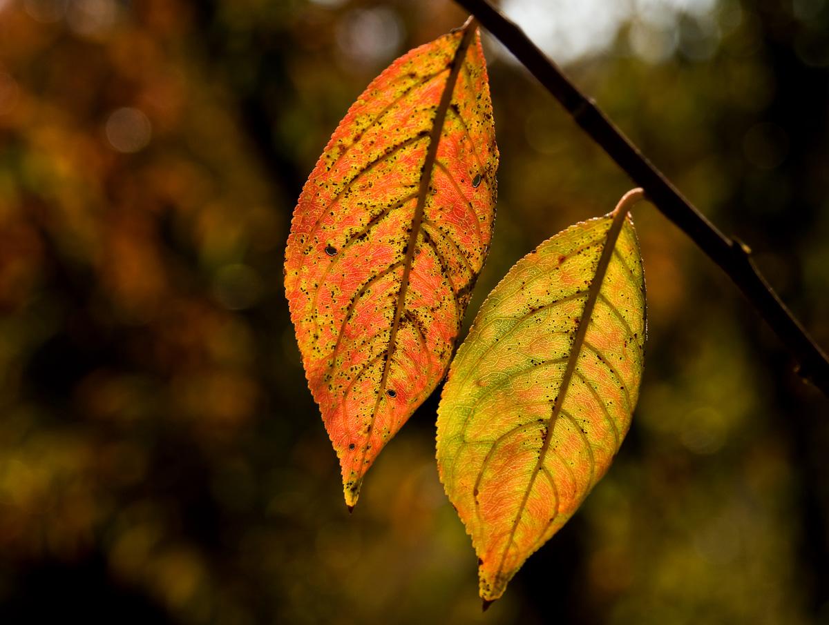 Fall_Foliage_10.jpg