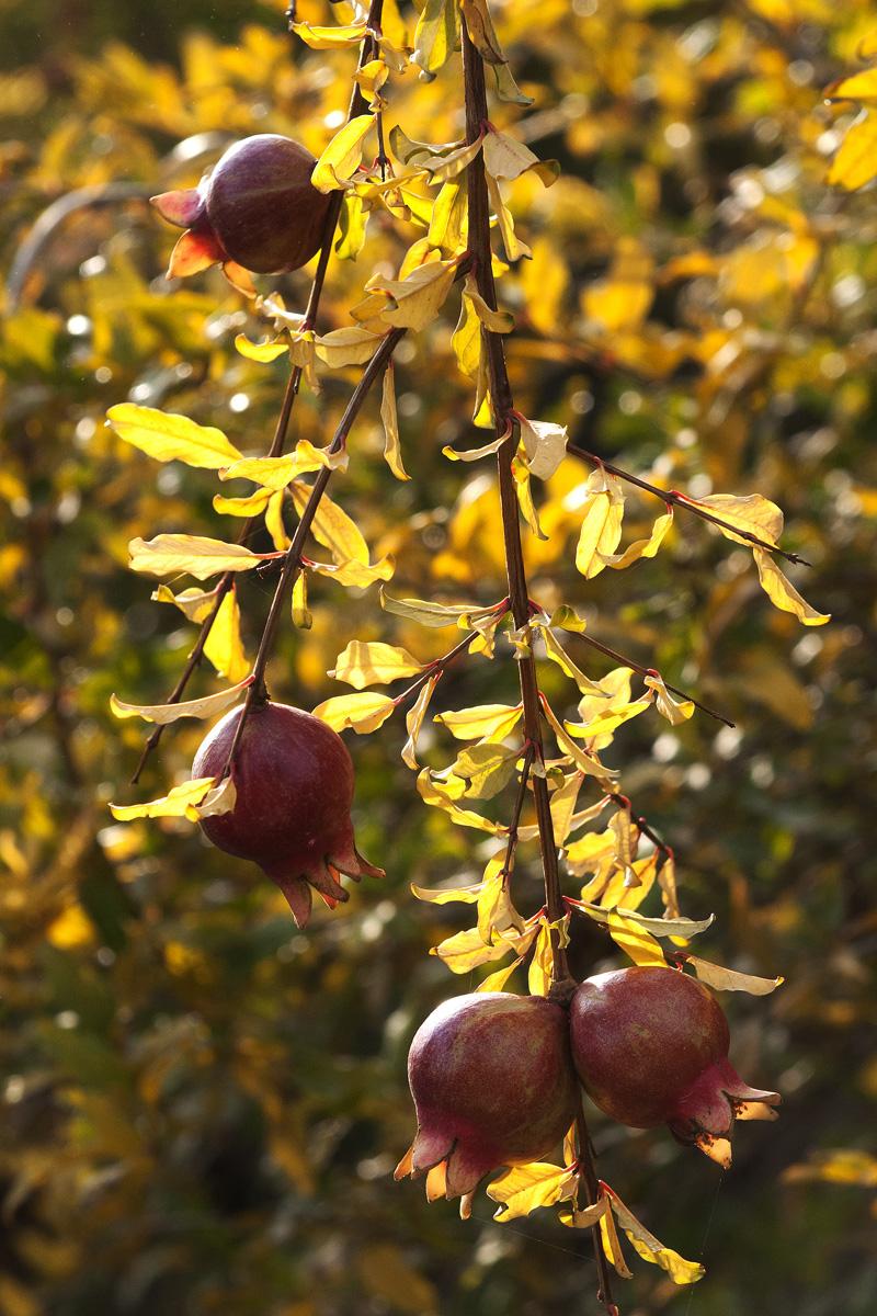 Fall_Foliage_11.jpg