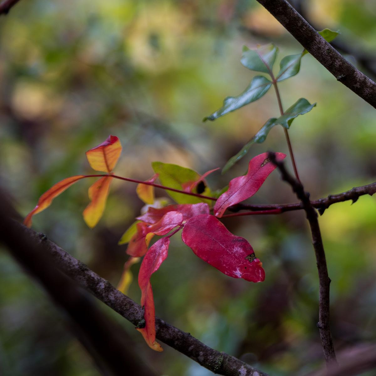 Fall_Foliage_16.jpg