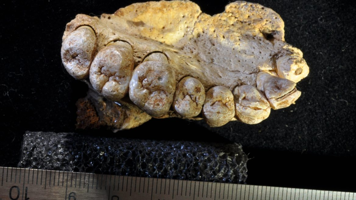 Human Migration Rewritten? Oldest Known Human Fossil Outside Africa Discovered In Israel