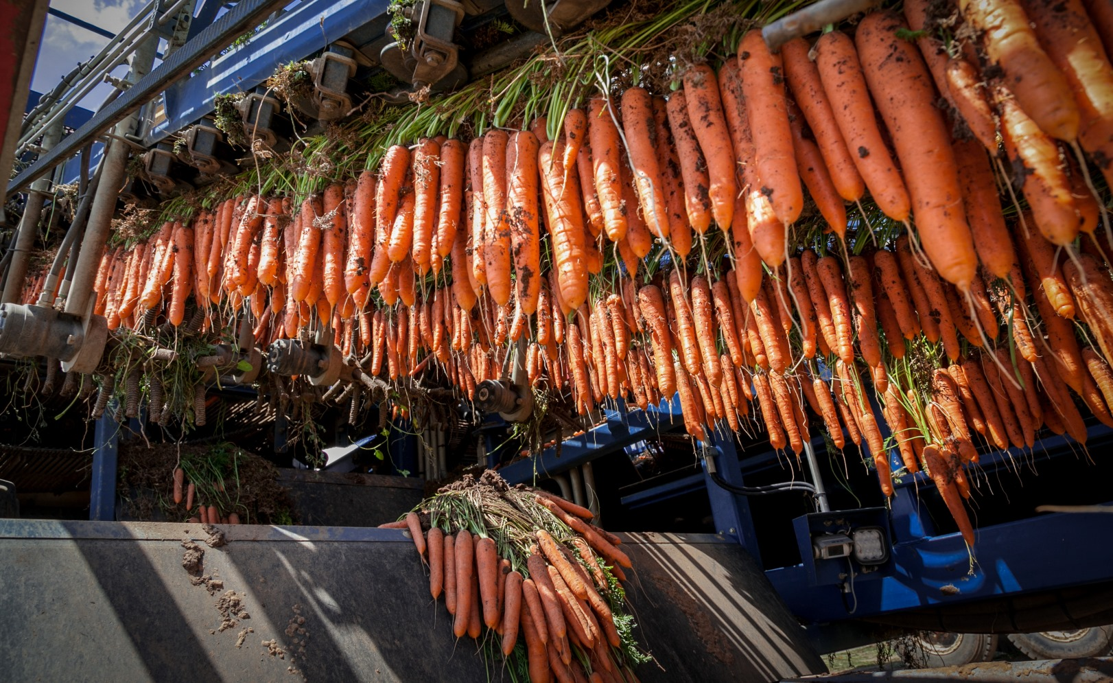 10 Glorious Photos Of Israel S Fruit And Vegetable Bounty