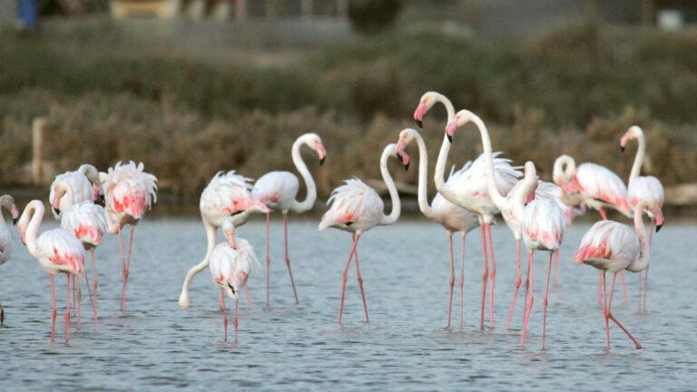 Israeli Salt Company Saves Water Fowl Opens Birdwatching Israel21c