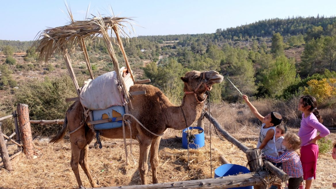 Can you build a sukkah on a boat or on top of a camel? - ISRAEL21c