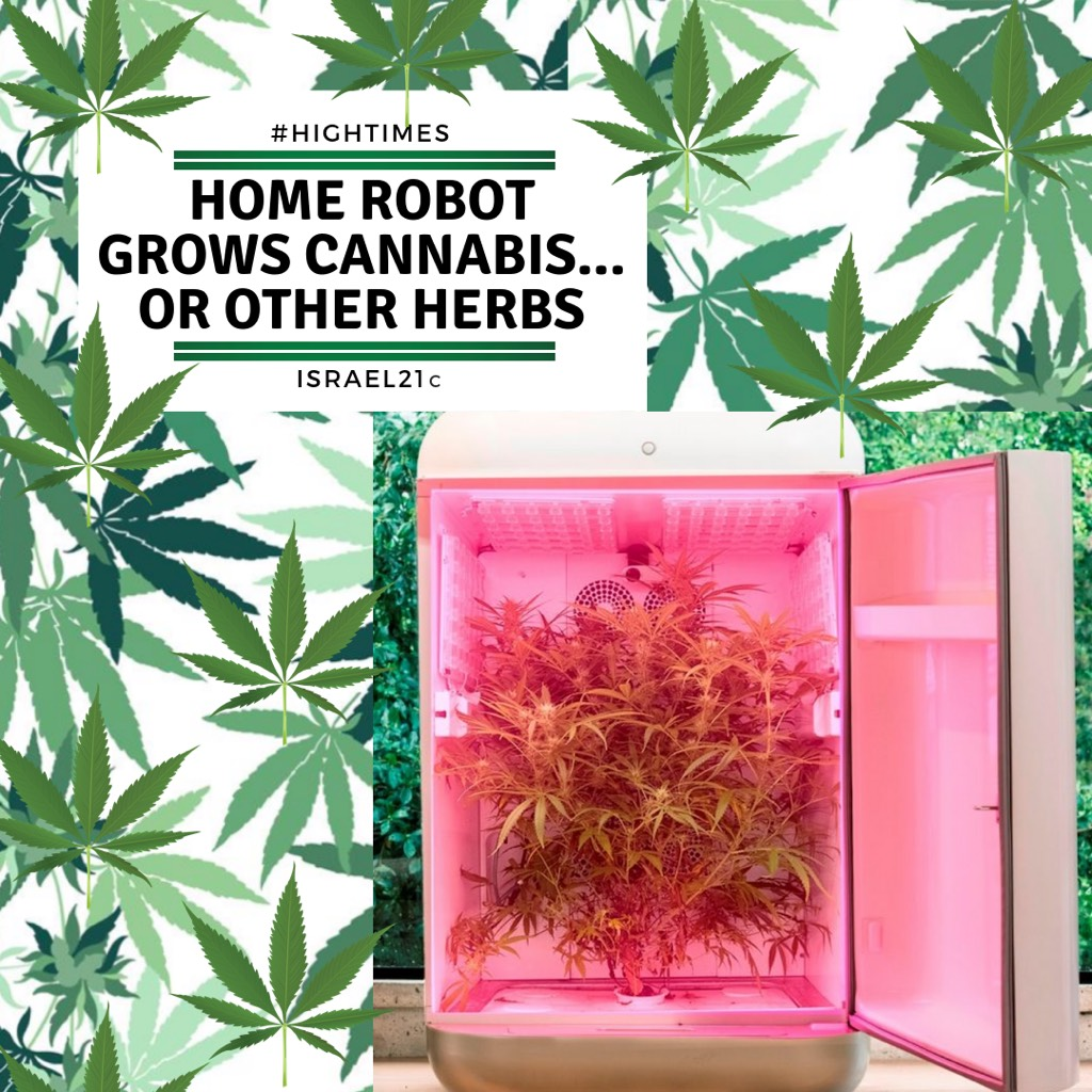 Home robot grows cannabis… or other herbs - ISRAEL21c