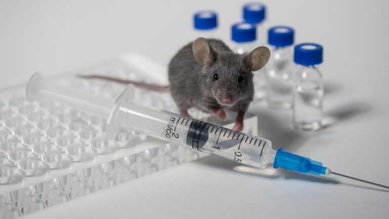 Big data can make lab-mice studies more relevant to humans - ISRAEL21c