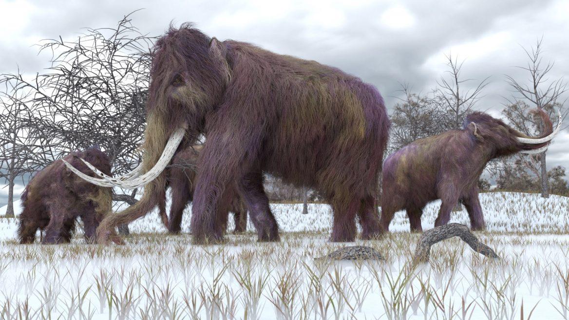 Mammuts und Neandertaler – gemeinsame genetische Merkmale?
