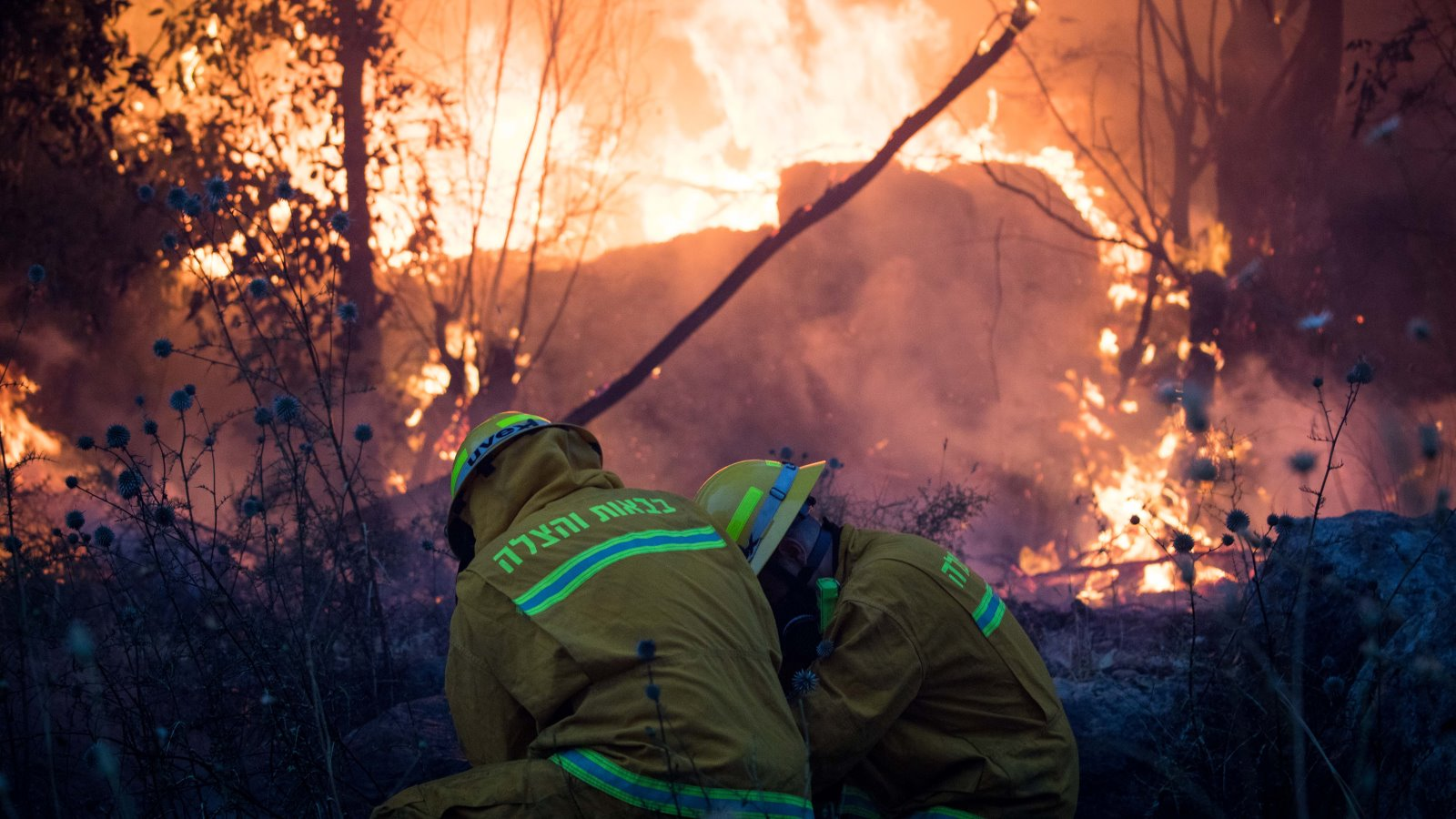 Aid pours in across Israel as wildfires destroy homes | ISRAEL21c