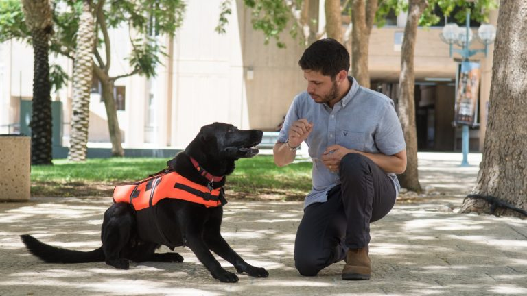 Картинки по запросу remote controlled haptic vest for dogs