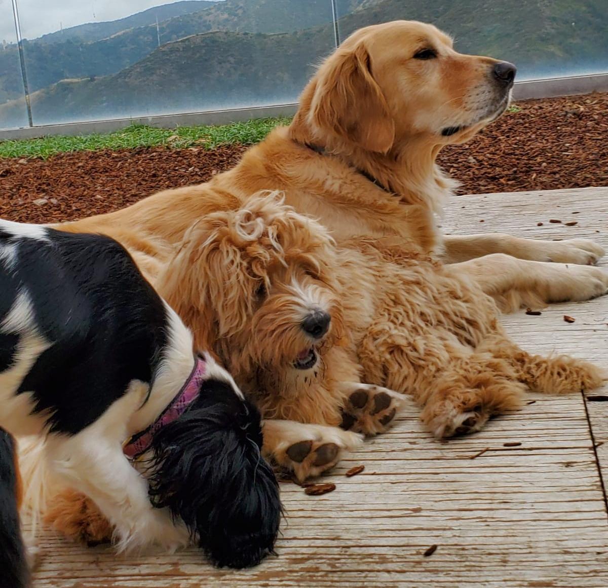 Meet the celebrity dog trainer putting man's best friend