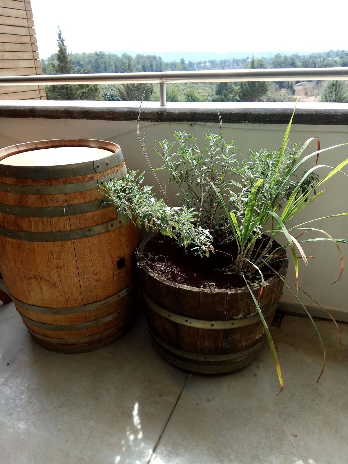 Grow An Israeli Herb Garden