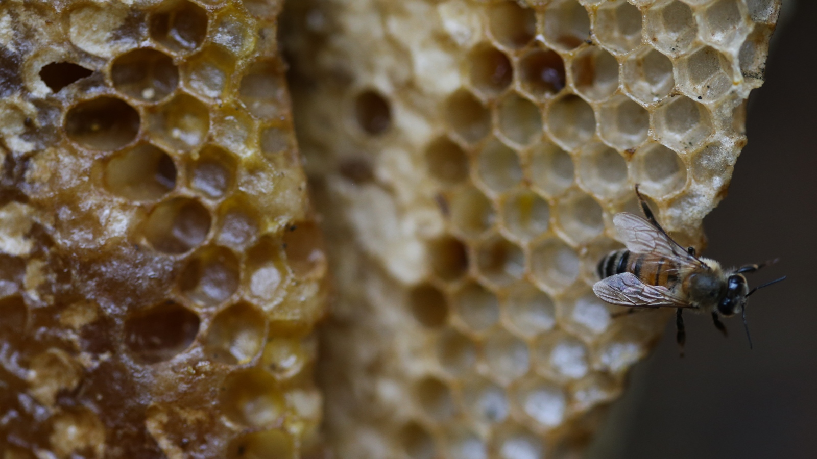The Israeli startup getting a buzz out of saving honeybees