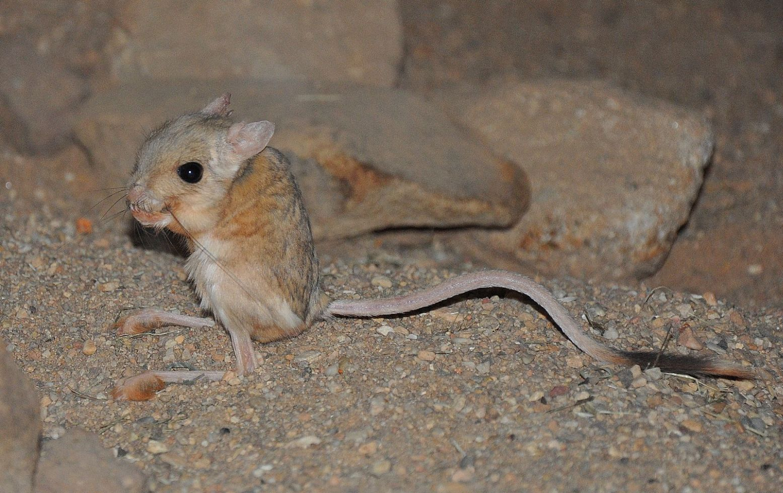 Check out Israel's 10 most unusual wild animals - ISRAEL21c