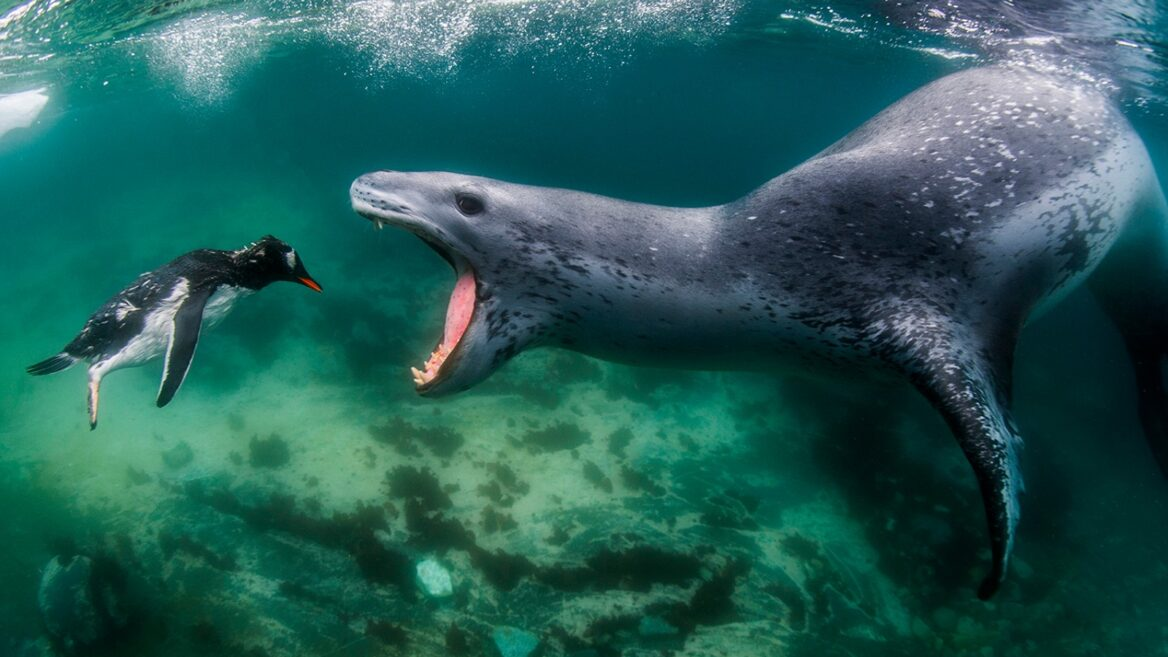 The photographer who swims with sharks and polar bears ...