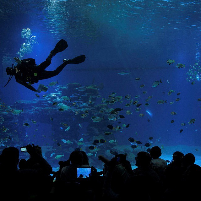 Aquarium visitors watch as a diver prepares to feed the sharks.  #Eilat #Aquarium #Sharks #ISRAEL21c.  by #Flash90