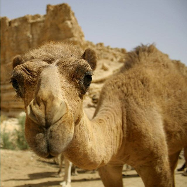 For some of us, Hump Day is every day.  #HappyHumpDay #AdorableAnimals #Summer #ISRAEL21c by Shutterstock
