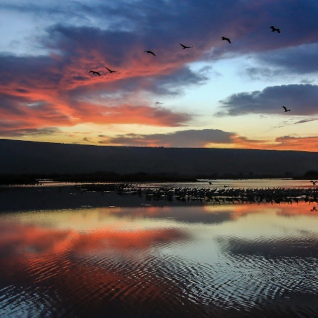 A beautiful dawn decorates the sky in the Hula Valley in Israel. #Nature #Sunrise #ColorfulSky #ISRAEL21c  by #Flash90