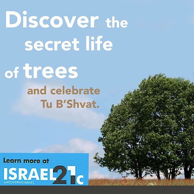 Enjoy Tu B\'Shvat with a DIY tour of Tel Aviv's most majestic trees! #TuBShvat