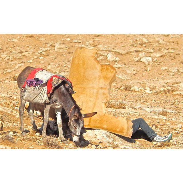 A #Bedouin shepherd takes a nap in the Judean Desert near Maale Adumim. #Israel  Photo Credit: Daniel Santacruz