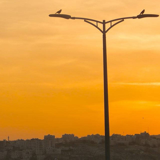 Birds at sunset in Maale Adumim #Israel  Photo credit: Daniel Santacruz