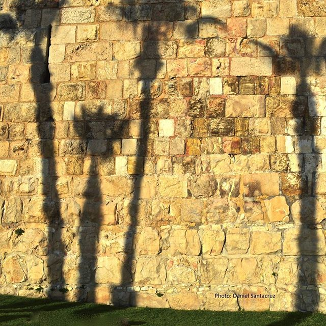 Palm trees reflected on the walls of Jerusalem\'s #OldCity  Photo credit: Daniel Santacruz