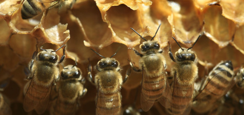 Bee-Colony