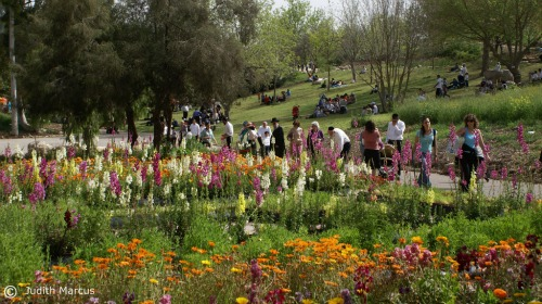 Jerusalem Botanical Gardens flowers