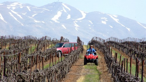 Golan Heights Winery vineyard