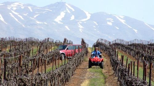 Golan Heights Winery vineyard