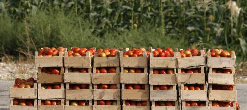 Tomato-Crates