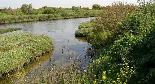 Kishon River green