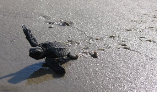 Sea turtle nest