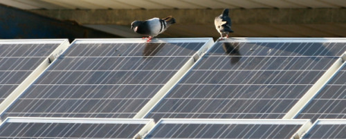 Solar-Panels-Texas-Israel