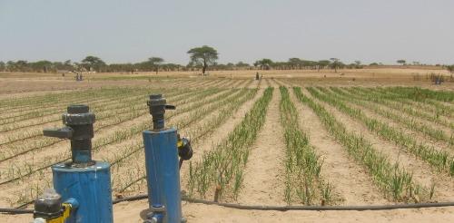 Tipa field