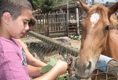 Child feeding a horse at Bell Ofri Farm