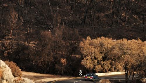 Devastated Carmel forest