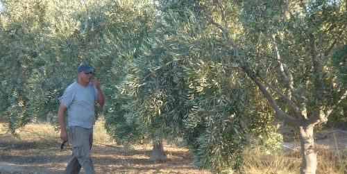 Doron-checking-trees-and-irrigation