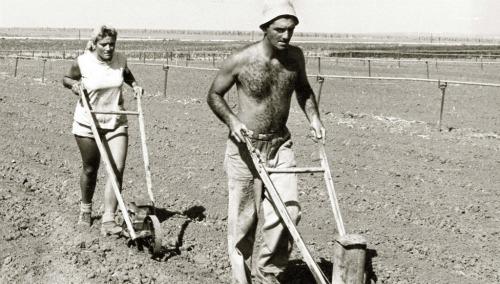 Kibbutz farming