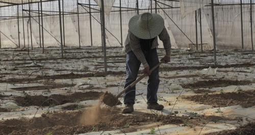 AKOL farmer