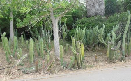 Cactus Garden in Yarkon Park