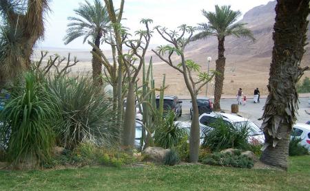 Kibbutz Ein Gedi Botanical Garden